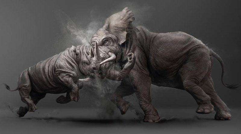 Rino vs Elephant